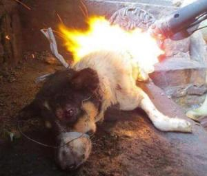 Dog burned alive